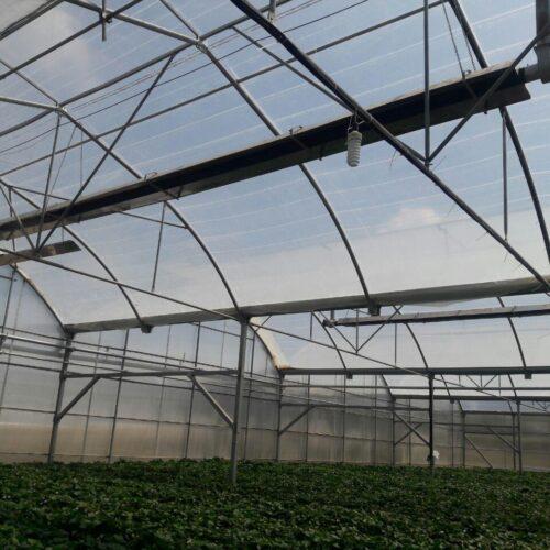 بخاری تابشی سقفی گلخانه گرماتاب